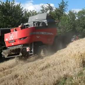 Massey Ferguson 7360 Beta zbiór zbóż na korbanek.pl