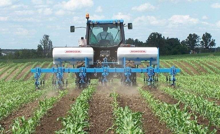 Pielnik do kukurydzy