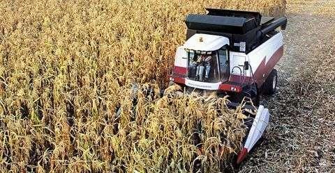przystawka do zbioru kukurydzy Rostselmash z kombajnem ACROS podczas pracy