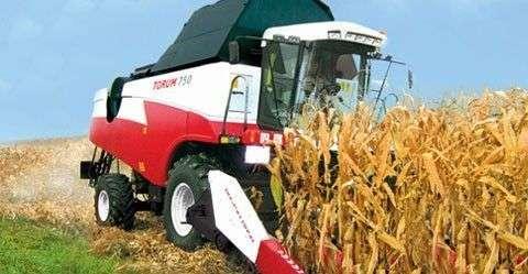 Kombajn Rostselmash Torum przy zbiorze kukurydzy