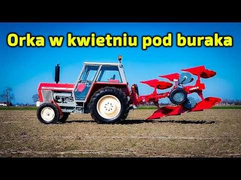 Embedded thumbnail for Dziadek orał wiosną i zebrał 80 t/ha buraków Bartek robi tak samo Ursusem Matheo780